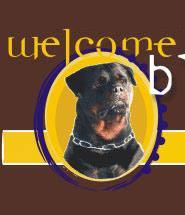 welcome to BlackTurk kennel